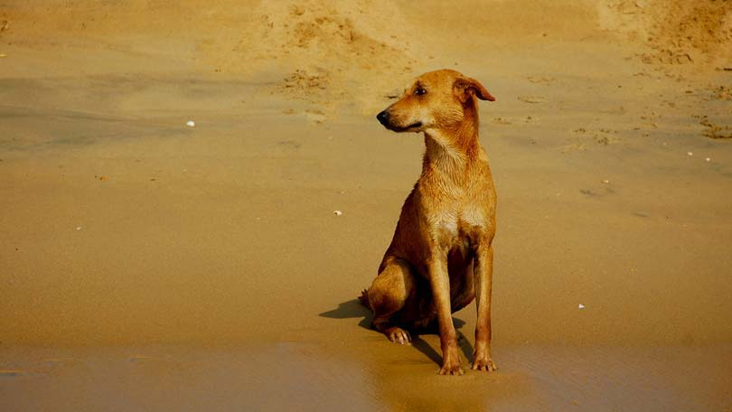 gi problems in dogs