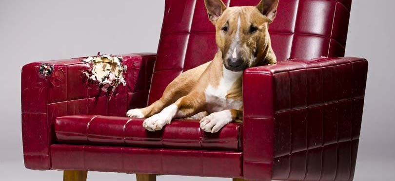 Couch vs sofa : dog 657 e1433184493518 from rsot.info size 810 x 372 jpeg 47kB