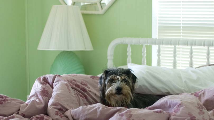 The First Step In Removing Pet Odors From Your Home
