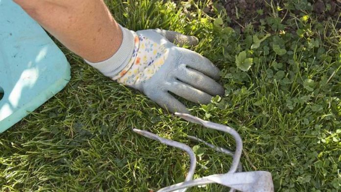 Are coffee grounds good for your lawn - Are coffee grounds good for your garden ...