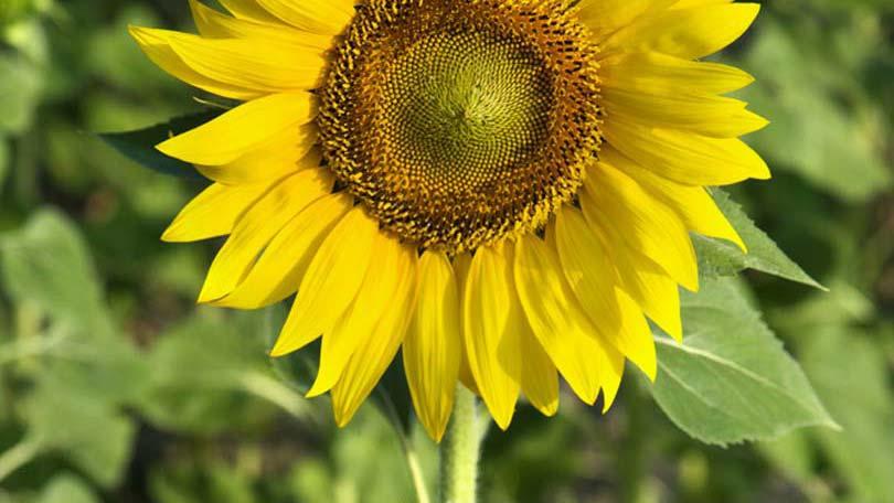 10 Pasos para Cultivar Plántulas | Bayer Avanzado