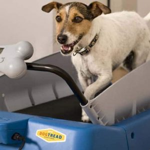 Tips for Finding the Best Dog Treadmill 1