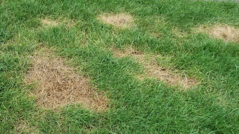 How To Banish Brown Patches On Your Lawn