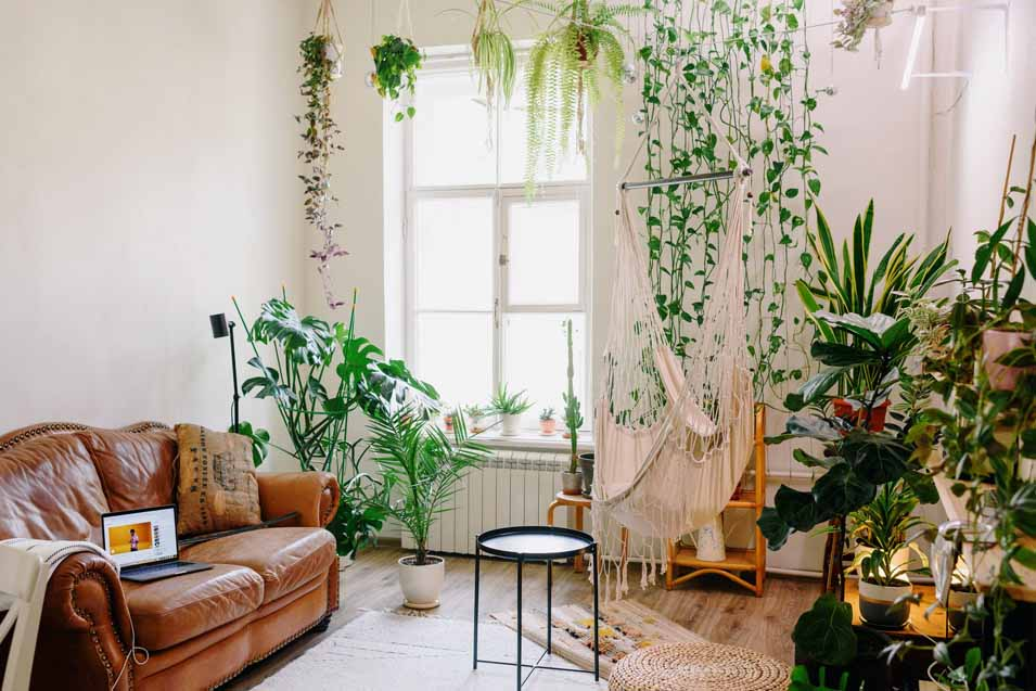 The benefits of a living wall at home