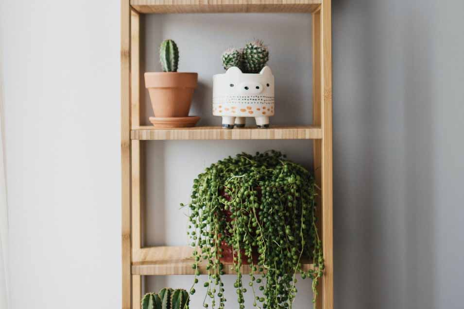 Reasons to add a plant wall to your home